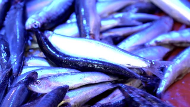 fishes on market - anchovy stock videos & royalty-free footage