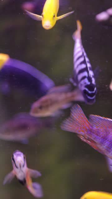 fishes swimming in aquarium - aquatic organism stock videos & royalty-free footage