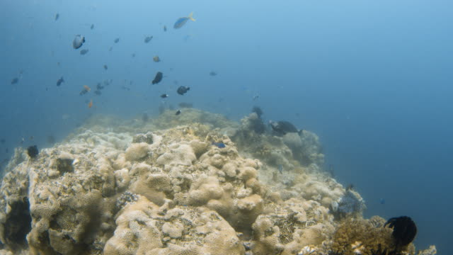 fishes with coral reef underwater - waschschwamm stock-videos und b-roll-filmmaterial