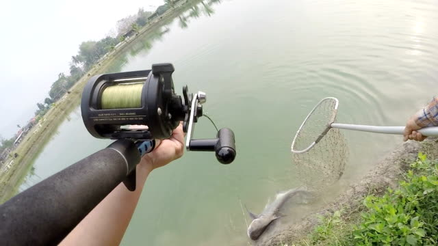 fishing a giant chao phraya catfish in lake. - fishing reel stock videos and b-roll footage