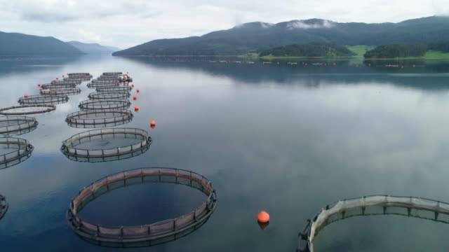 fishing. aerial view over a large fish farm with lots of fish enclosures. - sustainable tourism stock videos & royalty-free footage