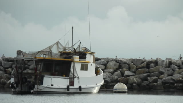 fishing boat anchored by jetty - medium group of animals stock videos & royalty-free footage
