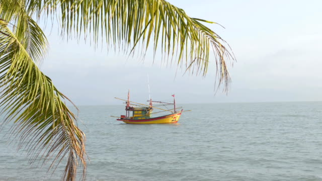 fishing boat as an excursion boat at palm tree beach - insel ko samui stock-videos und b-roll-filmmaterial