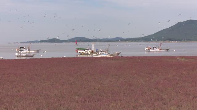 fishing boat at suaeda japonica (east asian seepweed) field and mud flat in ganghwado island / ganghwa-gun, incheon, south korea - anchored stock videos & royalty-free footage