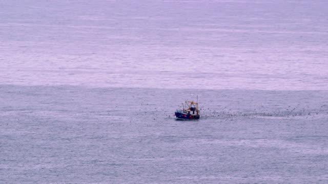 vídeos de stock, filmes e b-roll de fishing boat & bird - scarborough norte de yorkshire