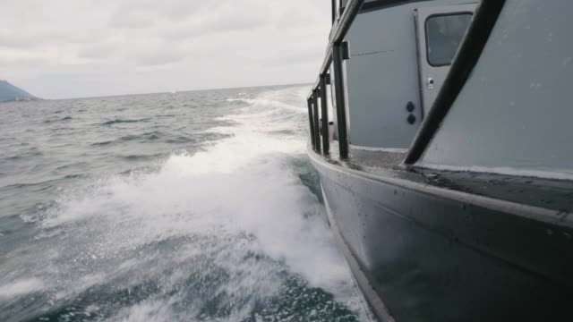 fishing boat cruising through water - whale watching stock videos and b-roll footage