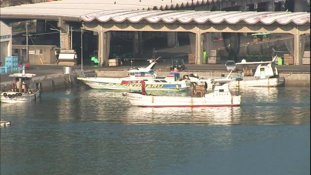 vídeos y material grabado en eventos de stock de a fishing boat enters the harbor near saiki bay in japan. - grupo pequeño de animales