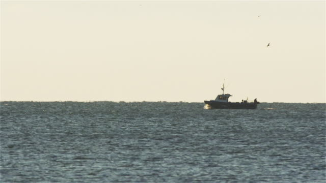 fishing boat passing by, fisherman dumping fish out of the back in silhouette. - eastern usa stock videos & royalty-free footage