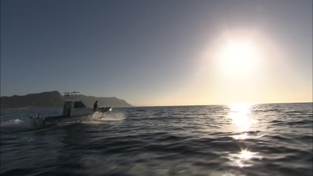 a fishing boat speeds across sun-dappled water. - mollusc stock videos & royalty-free footage