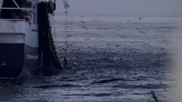 fishing boats at work in the north sea - rete da pesca commerciale video stock e b–roll