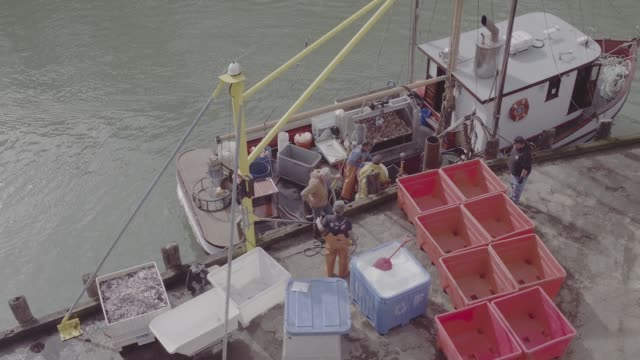 *no audio* fishing boats loaded with dungeness crabs unload their catch at ocean fresh fish wholesaler in fort bragg ca on tuesday january 21 2017... - crustacean stock videos & royalty-free footage