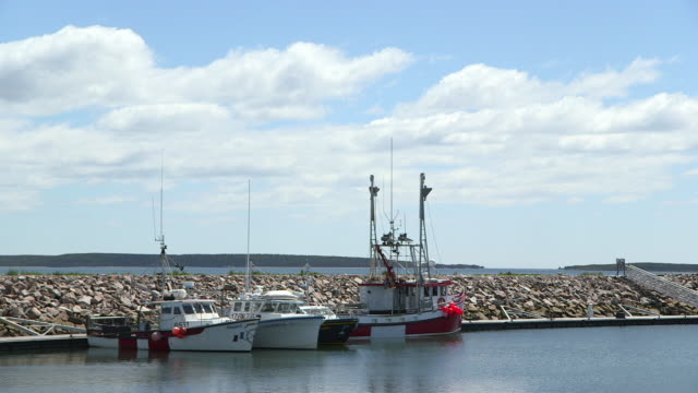 Fishing boats moored