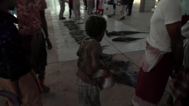 fishing catch of sharks laid out in fish market in khokha, yemen - 獲った魚点の映像素材/bロール