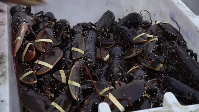 fishing catch of the day of lobster and crab in hull - invertebrate stock videos & royalty-free footage