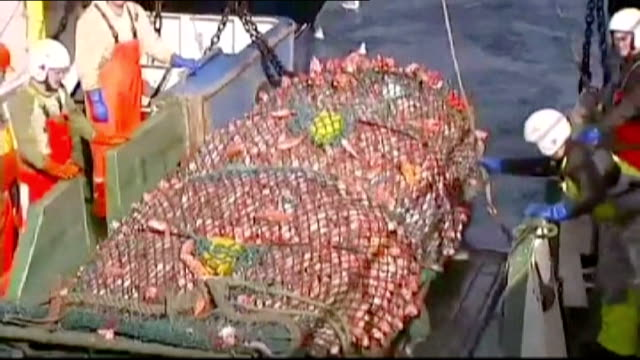 calls for radical change to commons fisheries policy over dumping of fish; england: devon: near brixham; at sea fishermen hauling full nets on to... - 船の一部点の映像素材/bロール