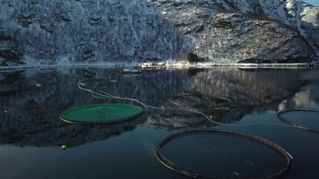 vídeos de stock, filmes e b-roll de fazenda de pesca no norte da noruega em um fiorde em hilleshamn, província de tromso - países nórdicos