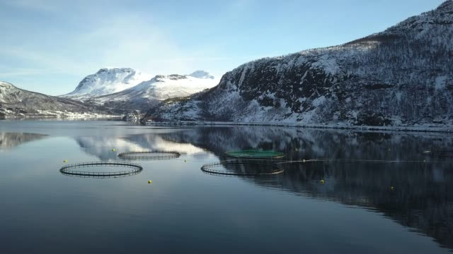 fishing farm in northern norway in a fjord in hilleshamn, tromso province - cage stock videos & royalty-free footage