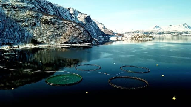 fishing farm in norway at the lofoten - fishing industry stock videos & royalty-free footage