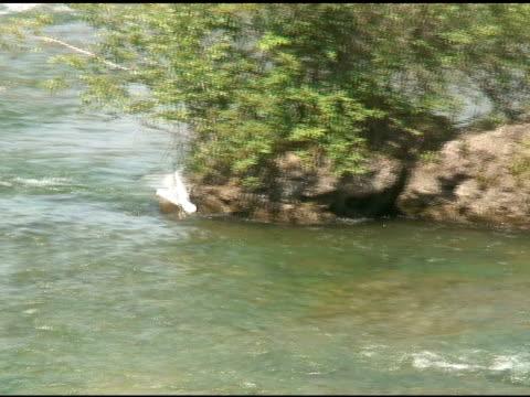 angeln gull-ntsc - fluss niagara river stock-videos und b-roll-filmmaterial