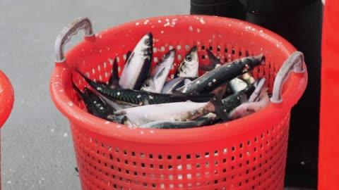 fiskeindustrin: leverera enorma fångst av fisk - korg bildbanksvideor och videomaterial från bakom kulisserna