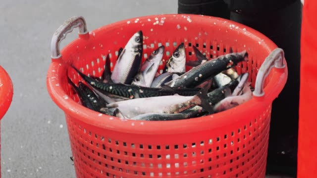 Fishing industry: delivering huge catch of fish