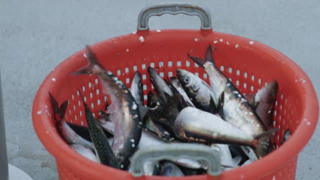 vídeos y material grabado en eventos de stock de industria pesquera: enorme captura de peces arenque en una cesta - atrapar