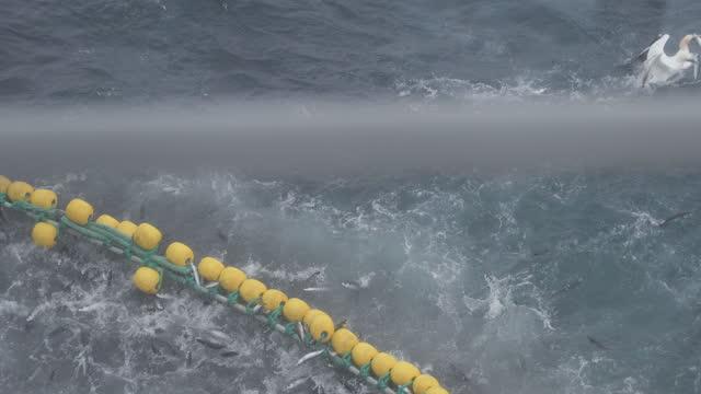stockvideo's en b-roll-footage met visserij: enorme vangst makreelvis op de boot in noordzee - vissersboot