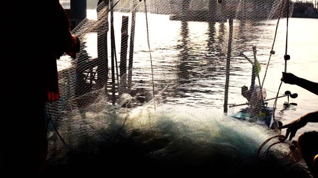 vídeos de stock e filmes b-roll de fishing industry, sorting the fish for fishermen. - peixe congelado