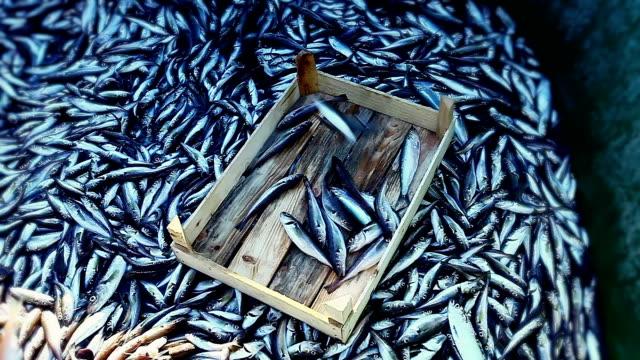 stockvideo's en b-roll-footage met fishing industry - vissersboot