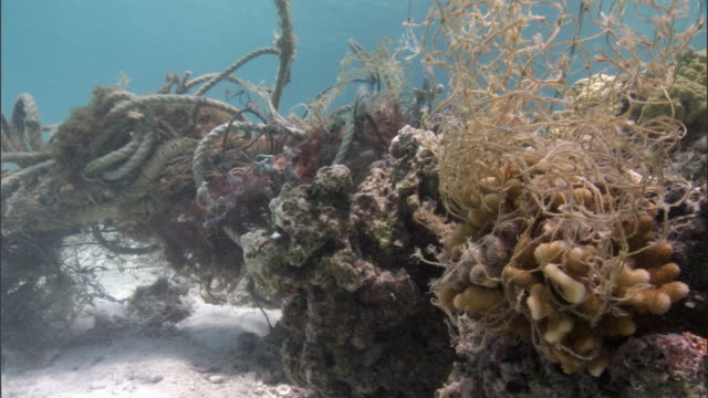 stockvideo's en b-roll-footage met fishing net entangled on coral reef, hawaii - oceaanbodem