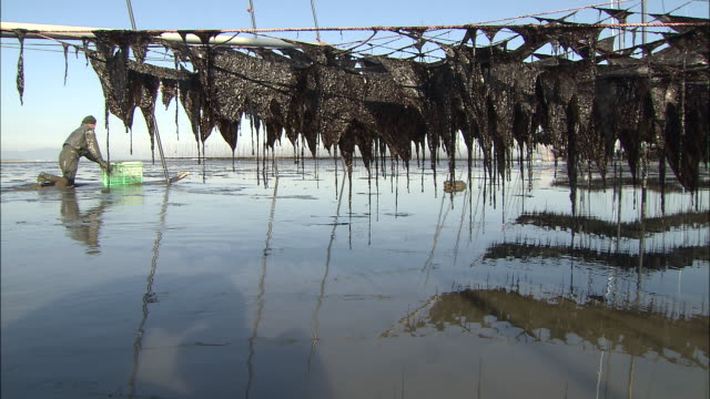 fishing nets hanging to dry while fisherman moves across tidal flat - ariake sea stock videos and b-roll footage