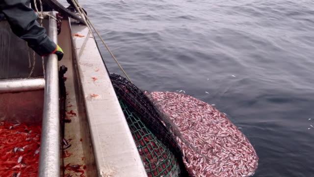 vidéos et rushes de fishing nets pulled into shrimp boat - industrie de la pêche