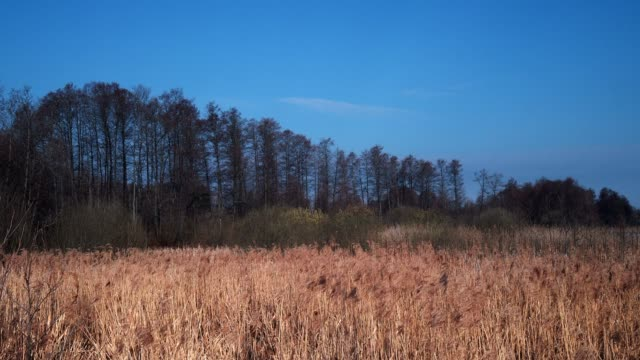 fishing place in early springtime - bulrush stock videos & royalty-free footage