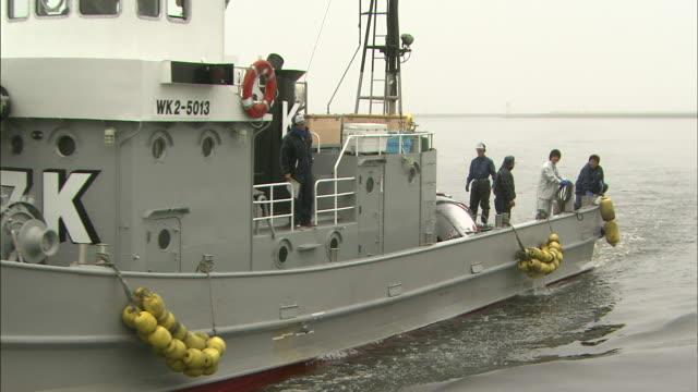 stockvideo's en b-roll-footage met a fishing ship enters a harbor. - vissersboot