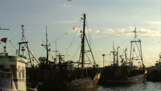 angeln schiffe mit einer menge von möwen-sonnenuntergang - ostsee stock-videos und b-roll-filmmaterial