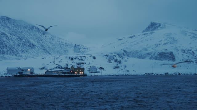 vídeos de stock e filmes b-roll de fishing skrei cod in the arctic sea - captura de peixe