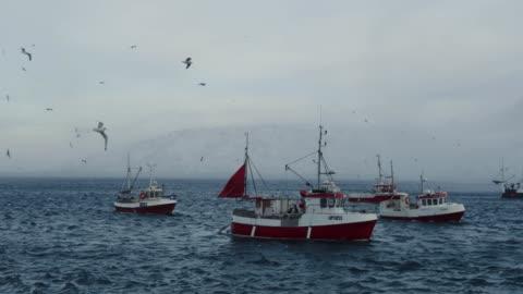 stockvideo's en b-roll-footage met vissen skrei kabeljauw in de arctische zee - fishing industry