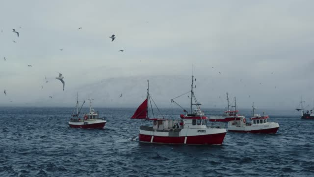 fishing skrei cod in the arctic sea - nautical vessel stock videos & royalty-free footage