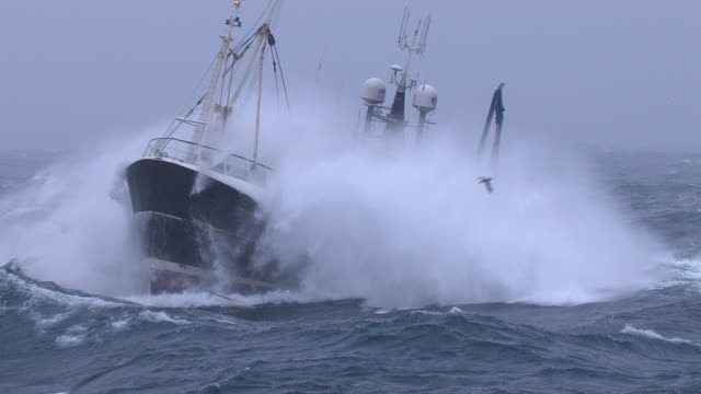 fishing trawler on rough atlantic ocean, scotland, uk - large group of animals stock videos & royalty-free footage