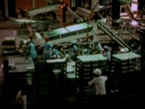 vídeos de stock e filmes b-roll de 1978 fishing vessels in a harbour, women preparing shrimps in a factory / surinam - camarão