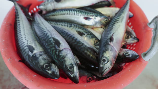fishingboat vessel fishing: huge catch of fish - catching stock videos and b-roll footage