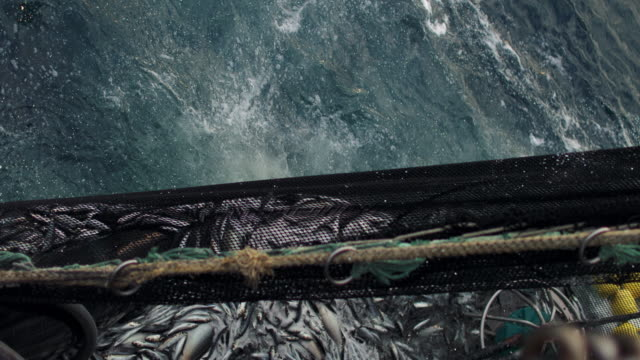 fishingboat vessel fishing: huge catch of fish - trawler stock videos & royalty-free footage