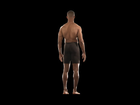 fit man rotating--full body - this clip has an embedded alpha-channel - pre matted stock videos & royalty-free footage