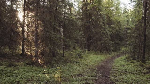 uhd 4k: fit senior couple running together on a trail through the woods - anchorage alaska stock videos & royalty-free footage