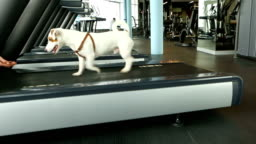 Fitness motivation funny dog joke.