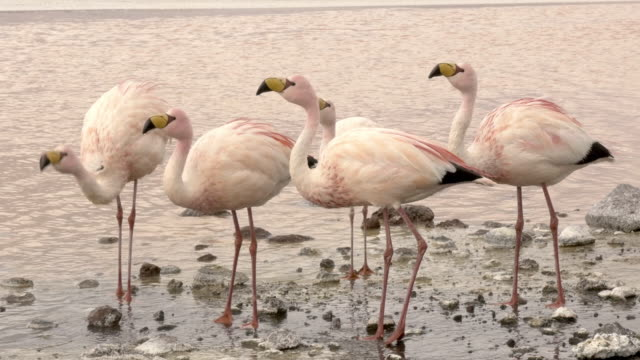 Five flamingos in the lake