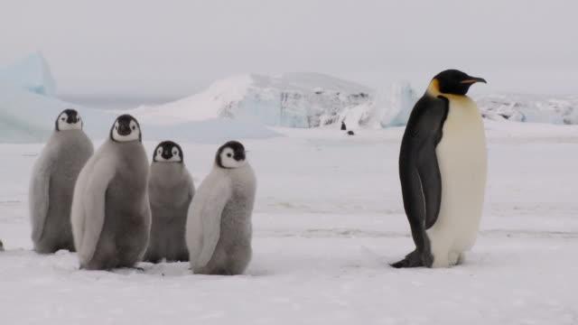five penguin snow scenery