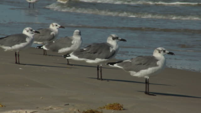 Five seagulls stand on the beach and watch the waves