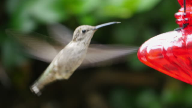 Five videos of real humming bird in 4K