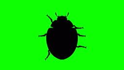 Fixed Beetle on green screen, CG animated silhouette, looping